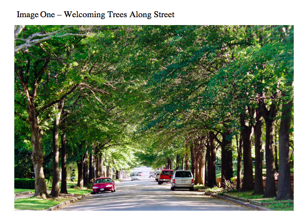 Welcoming Trees Along Street
